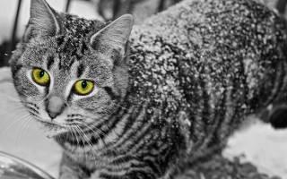 Признаки простуды у котов