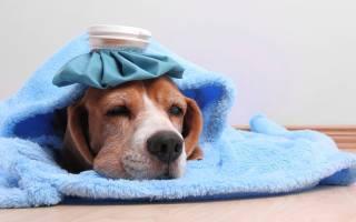 Как вылечить собаку от простуды
