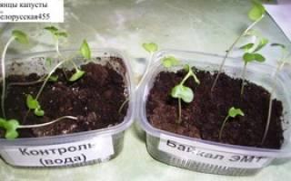 Иммуностимуляторы для растений